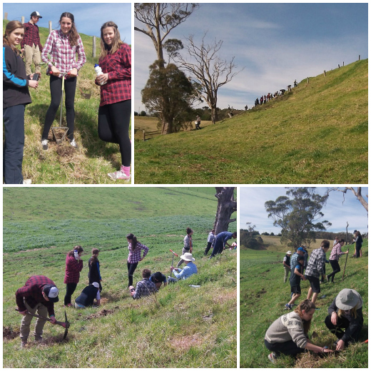 Community Service with Landcare